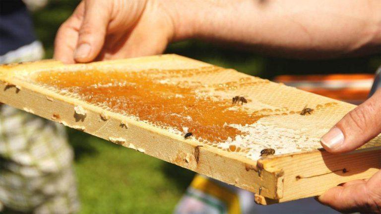 Bienenwabe mit Bienen im Wildpark Schwarze Berge