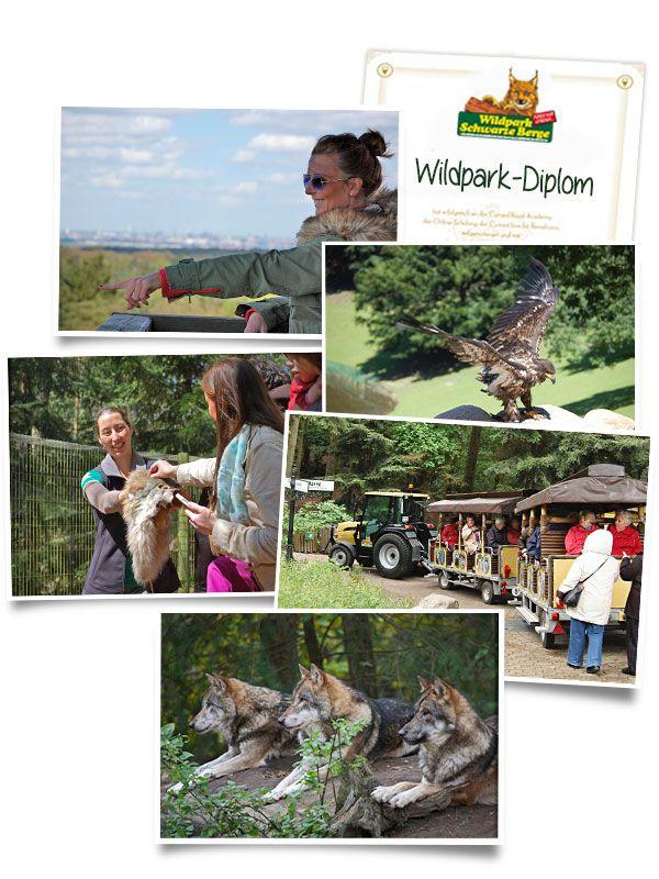 Erlebnistouren zum Elbblickturm, zur Wolfsfütterung, Flugschau, Wildpark-Diplom oder mit der barrierefreien Wildpark-Bahn im Wildpark Schwarze Berge