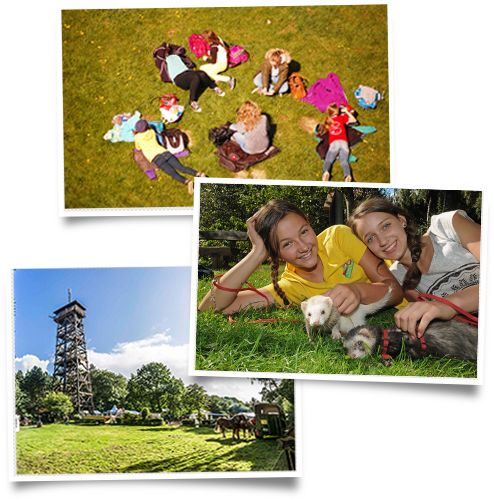 Picknickplätze, Imbiss oder Kiosk im Wildpark Schwarze Berge