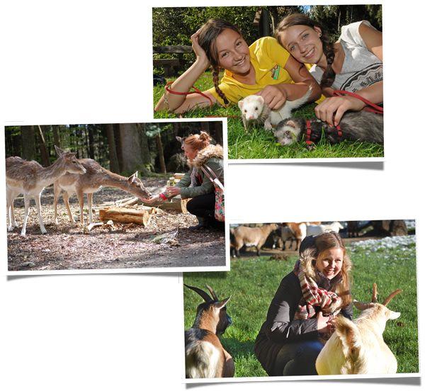 Streicheln, füttern und Anfassen im Streichelgehe im Wildpark Schwarze Berge
