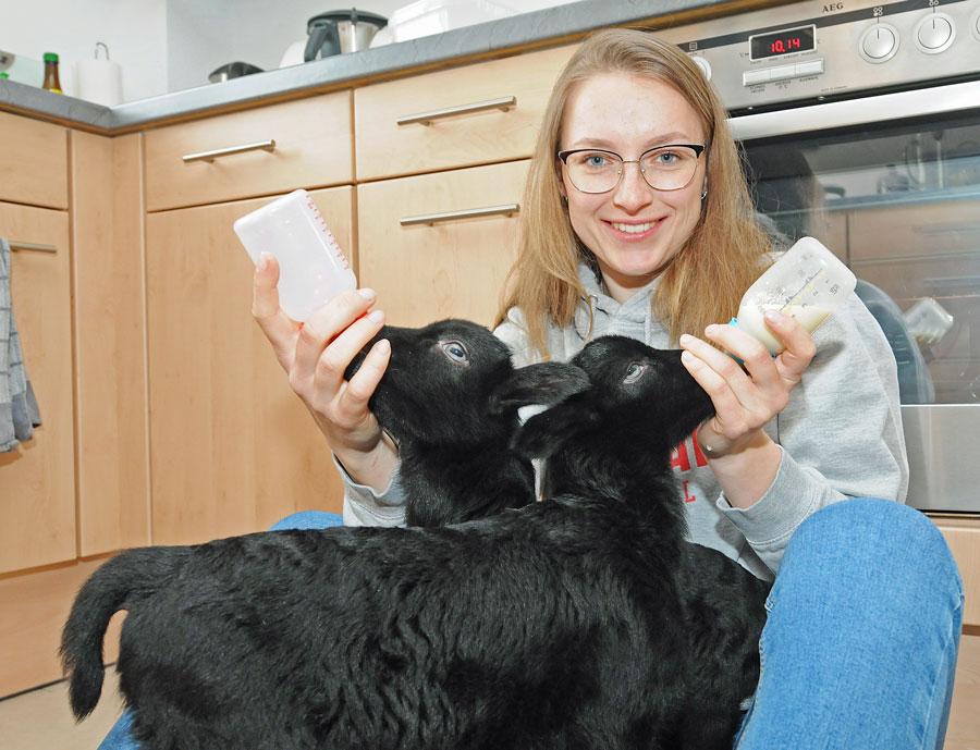 Tierpflegerin Franka füttert die Heidschnucken-Lämmer