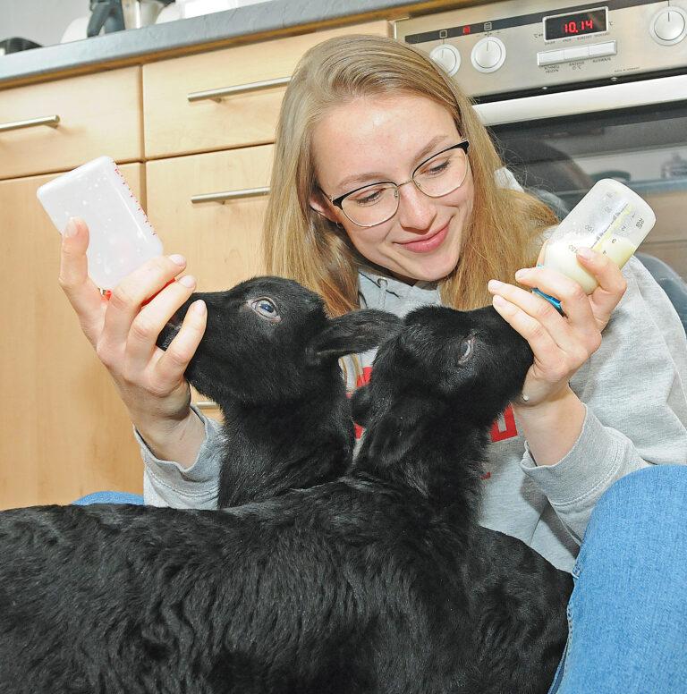 Tierpflegerin füttert zwei Heidschnucken-Lämmer mit der Flasche