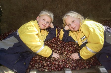 Im Wildpark Schwarze Berge werden wieder Kastanien angenommen. Kilo 10 Cent.Wer also fleisig sammelt, kann sein Taschengeld aufbessern.