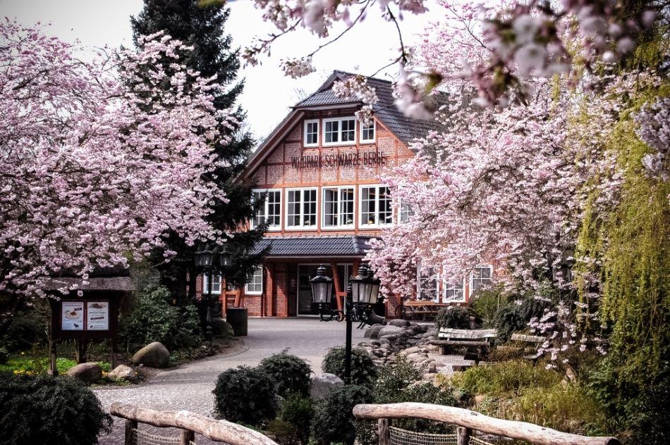 Eingangsgebäude mit Kirschblüten, Bäumen und Zuwegung zum Wildpark Schwarze Berge