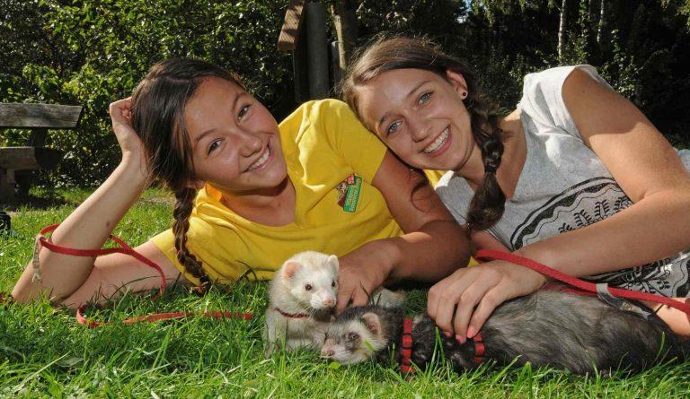 Zwei Mädchen liegen mit zwei Frettchen an der Leine auf der Wiese