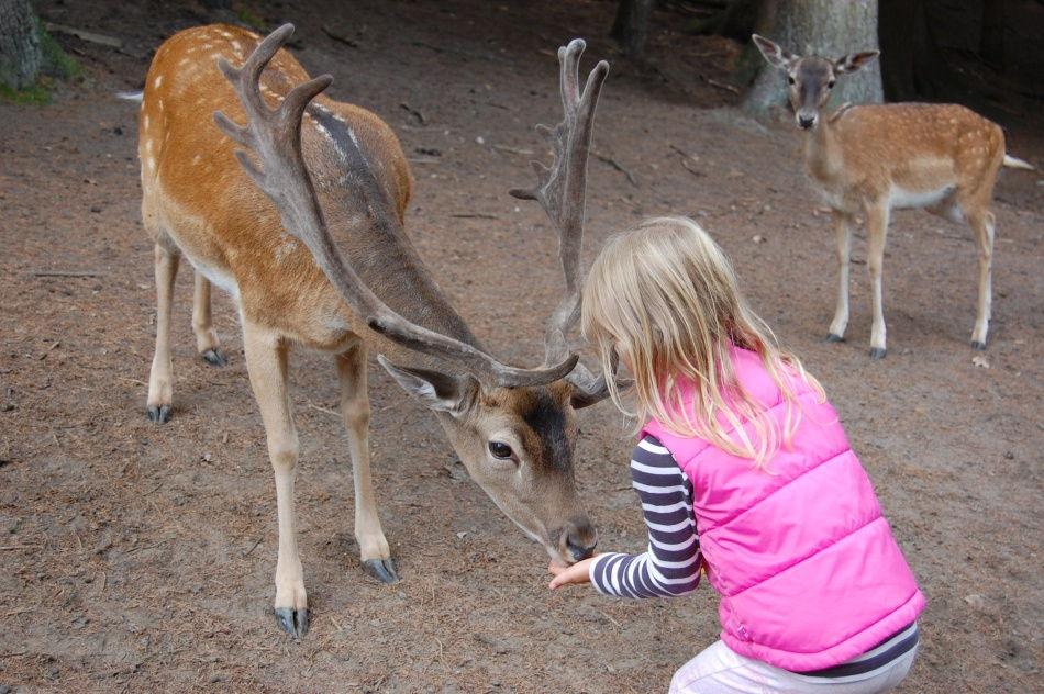 Tiere füttern im großen Freigehege im Wildpark Schwarze Berge