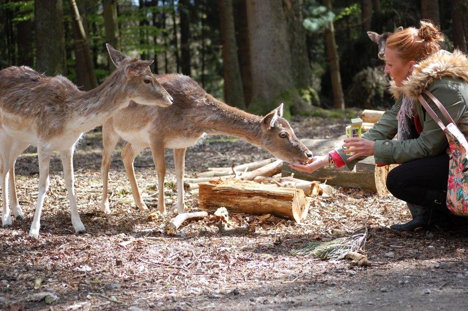 Tiere füttern im Freigehege im Wildpark Schwarze Berge