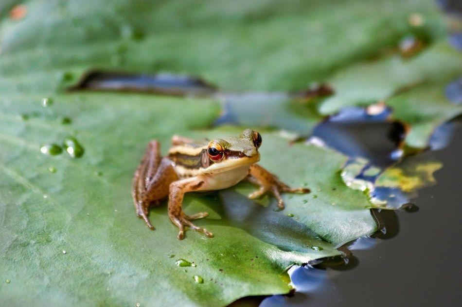 Frosch sitzt auf einem Seerosenblatt im Tümpel im Wildpark Schwarze Berge