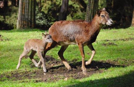 Führung zu den jungen Wilden Wildpark Schwarze Berge