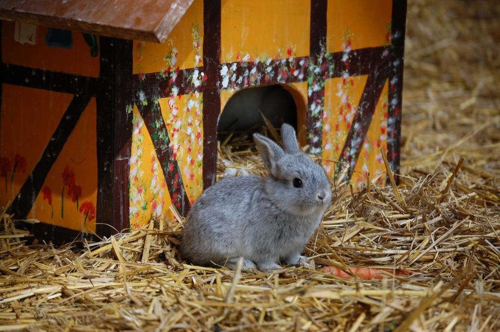 Ein kleines graues Kaninchen sitzt vor seiner Hütte