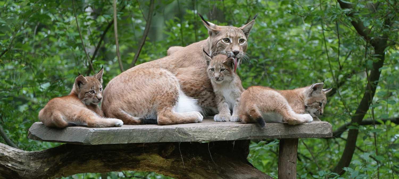 Mama beschützt ihre Jungtiere
