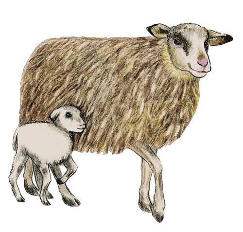 Schaf mit Lamm im Wildpark Schwarze Berge