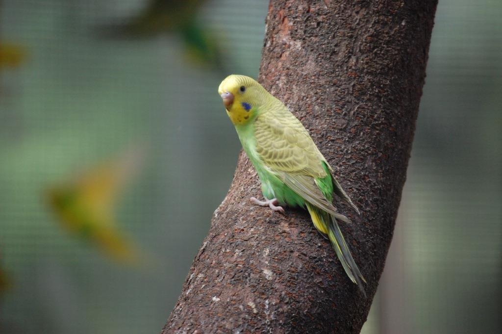 Gelb-grüner Wellensittich sitzt auf einem Baumstamm