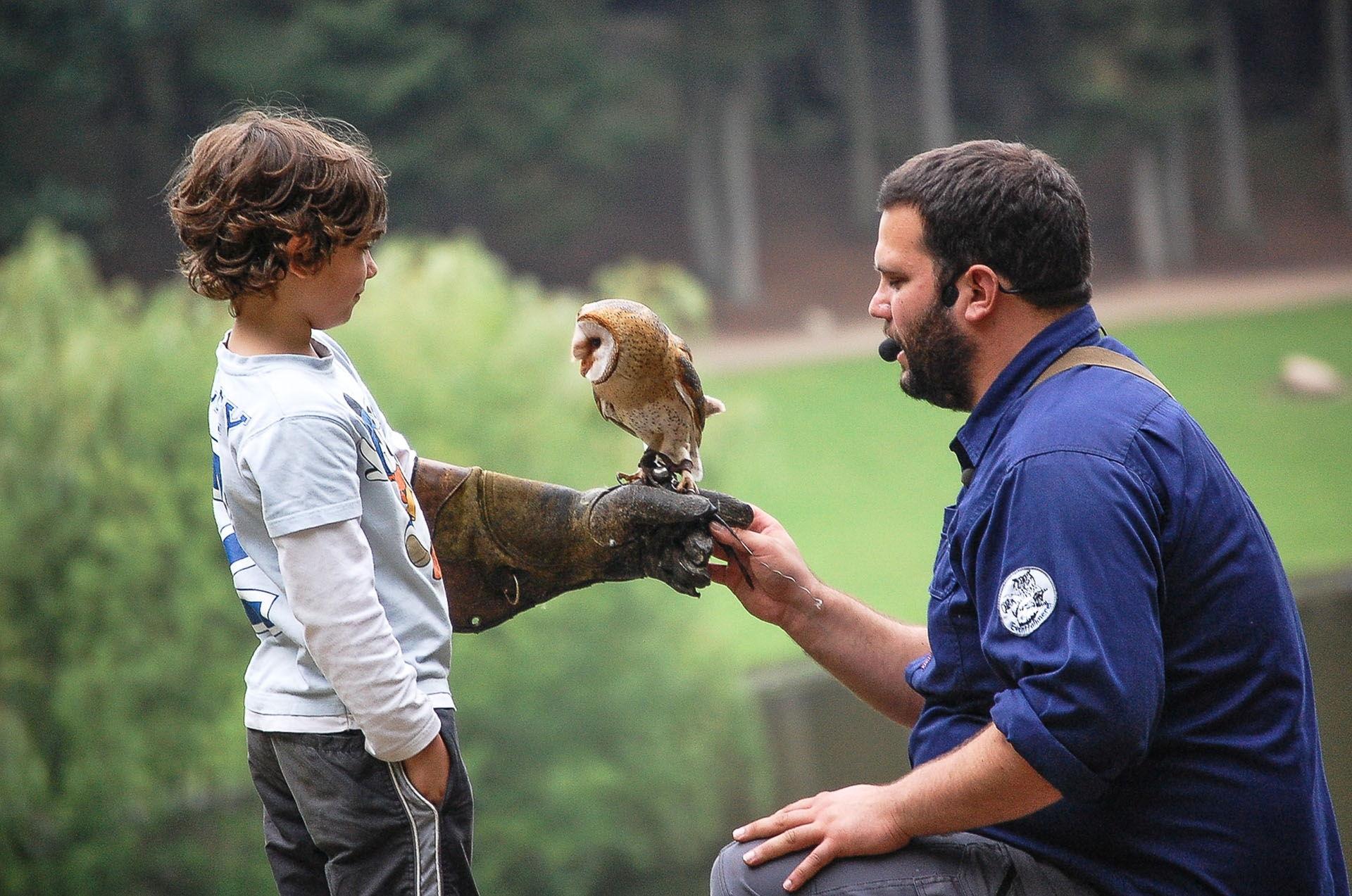 Junge hält Weissgesichtseule auf dem Arm bei der täglichen Flugshow im Wildpark Schwarze Berge
