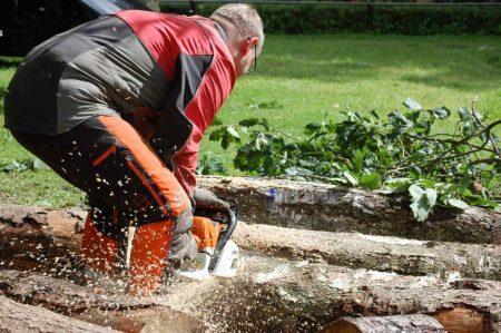 Mann sägt mit Motorsäge einen Baumstamm durch