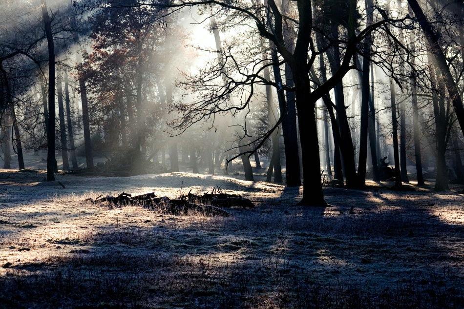 Wald inder Abendstimmung im Wildpark Schwarze Berge