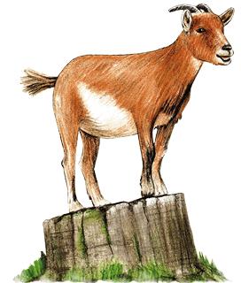 Ziege meckert auf Baumstumpf im Wildpark Schwarze Berge