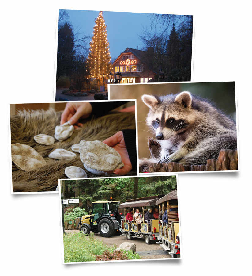 Weihnachtsfeier im Wildpark Schwarze Berge Collage