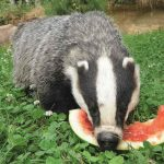 Lecker, Wassermelone!