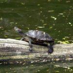 Schildkröte im Wildpark Schwarze Berge