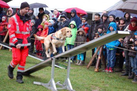 Rettungshund geht über Wippe vor Zuschauern