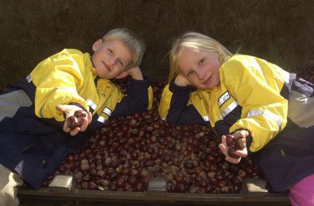 Eicheln- und Kastanienannahme im Wildpark Schwarze Berge, Eicheln, Kastanien, Mädchen, Junge, gesammelt