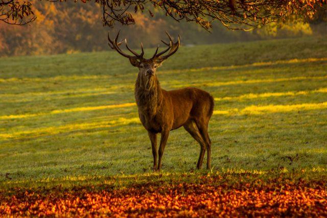 Führung zur Brunft im Herbst im Wildpark Schwarze Berge