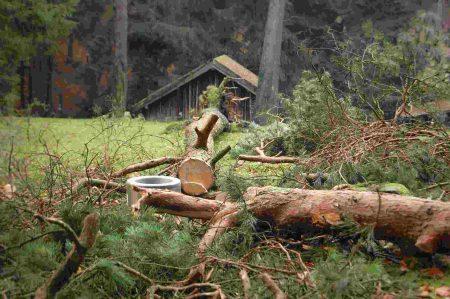 Herbst im Wildpark Schwarze Berge-10 (003)