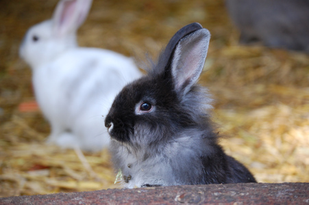 Kaninchen im Wildpark Schwarze Berge