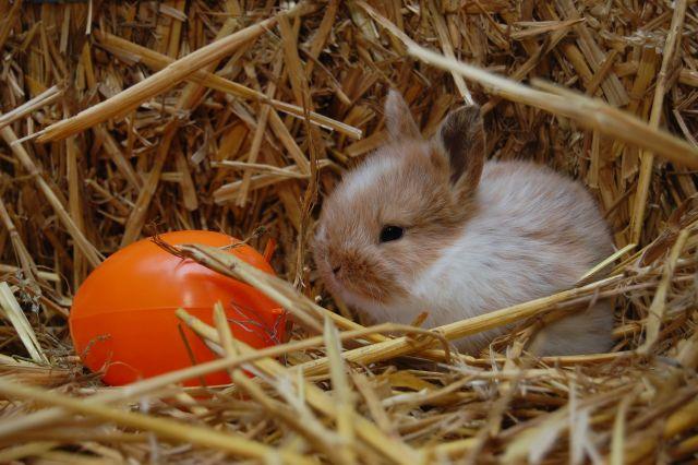 Oster-Kaninchen mit bunten Ostereiern