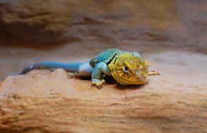 Reptilienausstellung im Wildpark Schwarze Berge