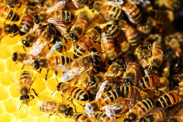 Bienenwabe im Wildpark Schwarze Berge, Biene, Wabe, Tag der Biene