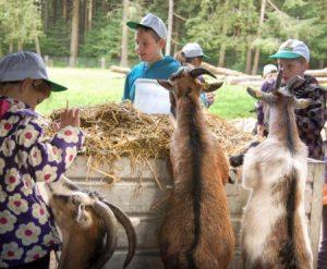 Kinder im Streichelgehege mit Zwergziegen beim Tierpfleger-Ferienprogramm
