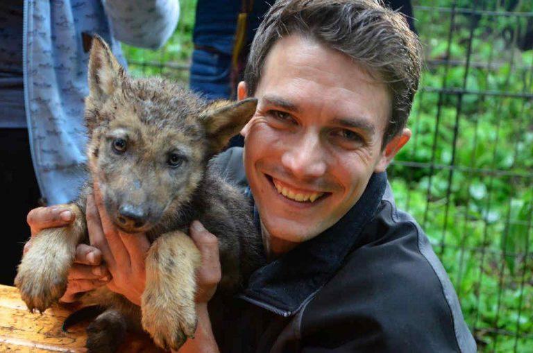 Tierpfleger Sebastian Müller mit Wolfnachwuchs