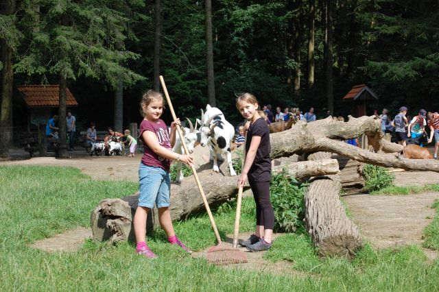 Ein Tag als Tierpfleger im Wildpark Schwarze Berge, Ferienprogramm, Ziegengehege, Ziegen, Mädchen, Baumstamm