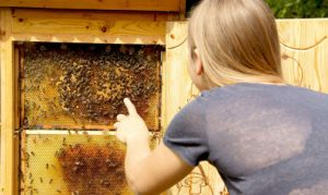 Bienenvolk im Wildpark Schwarze Berge, Bienen, Volk, Völker, Königin, Wabe, Imker
