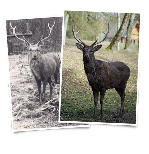 Wild früher und heute
