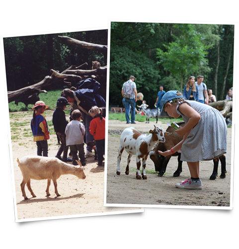 Ziegengehege früher und heute